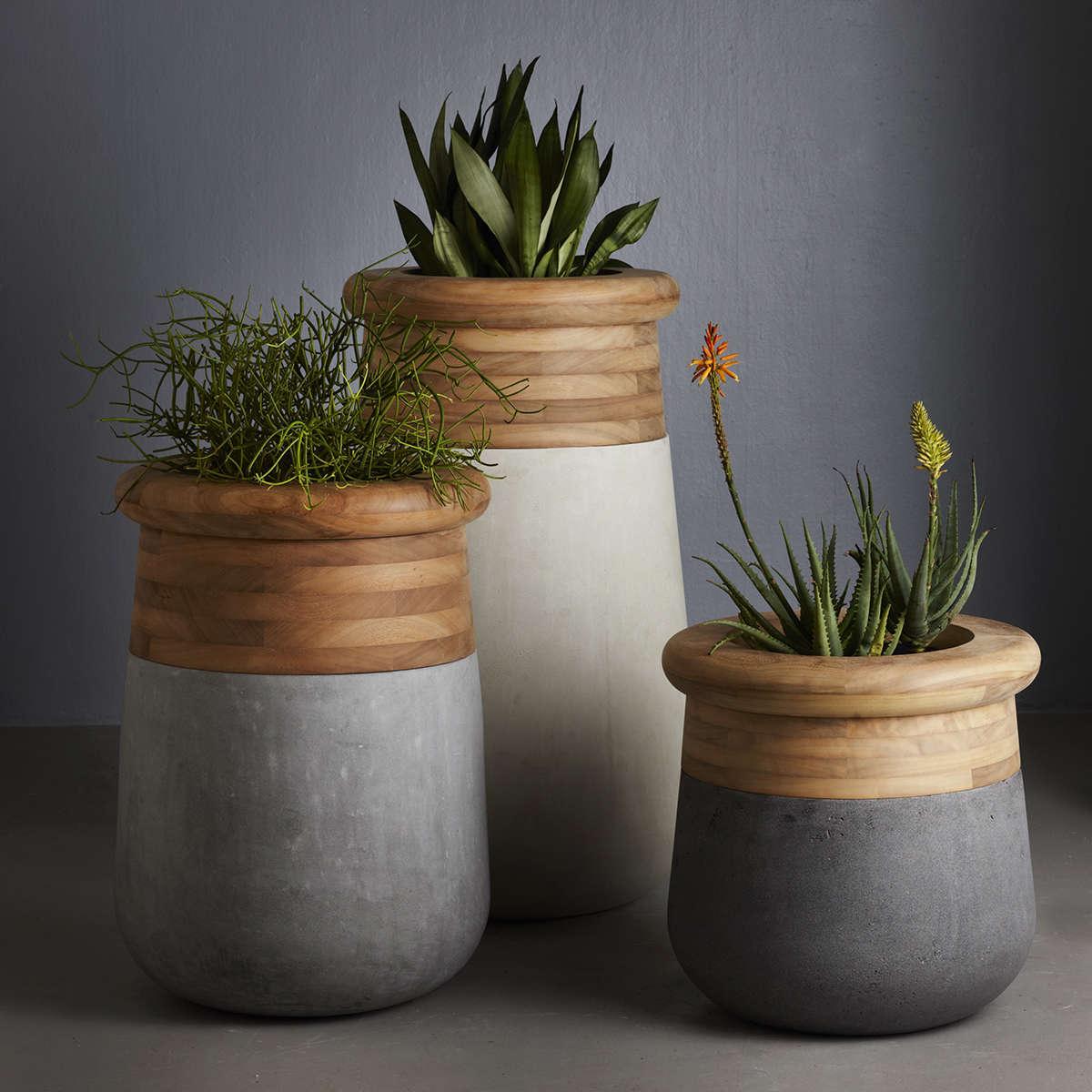 Indigenus Soma Container  Ambient 1